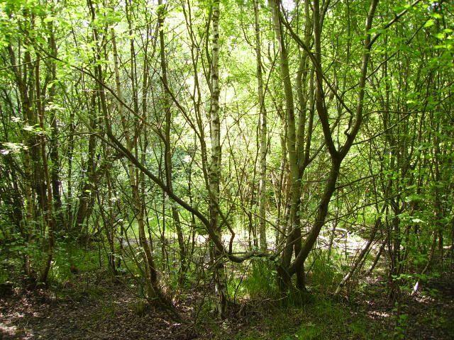 2008_0608Bwood20012.jpg