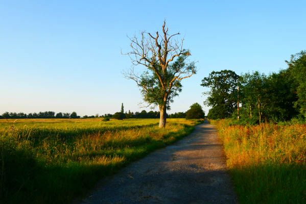 Bridle Path.jpg
