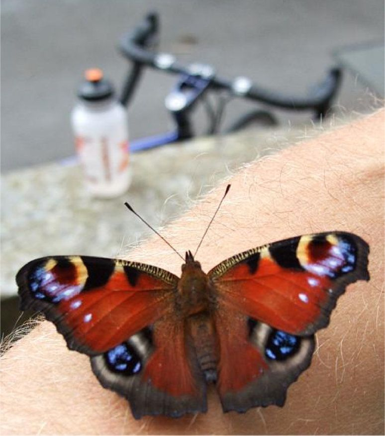 Butterfly on arm.jpg