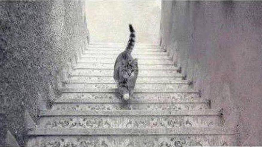 CatStairsImgur1.jpg