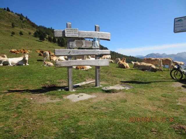 day2-aspin-cows.jpg