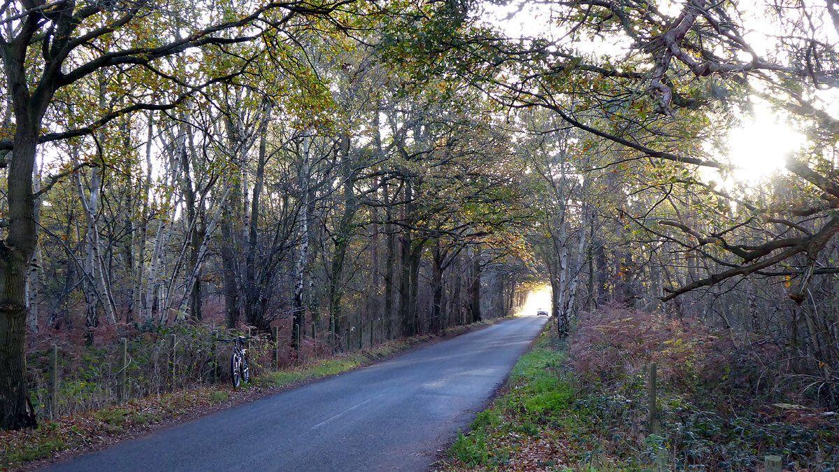 Dobbs Lane (1).JPG