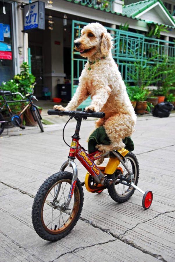dog_bicycle.jpg
