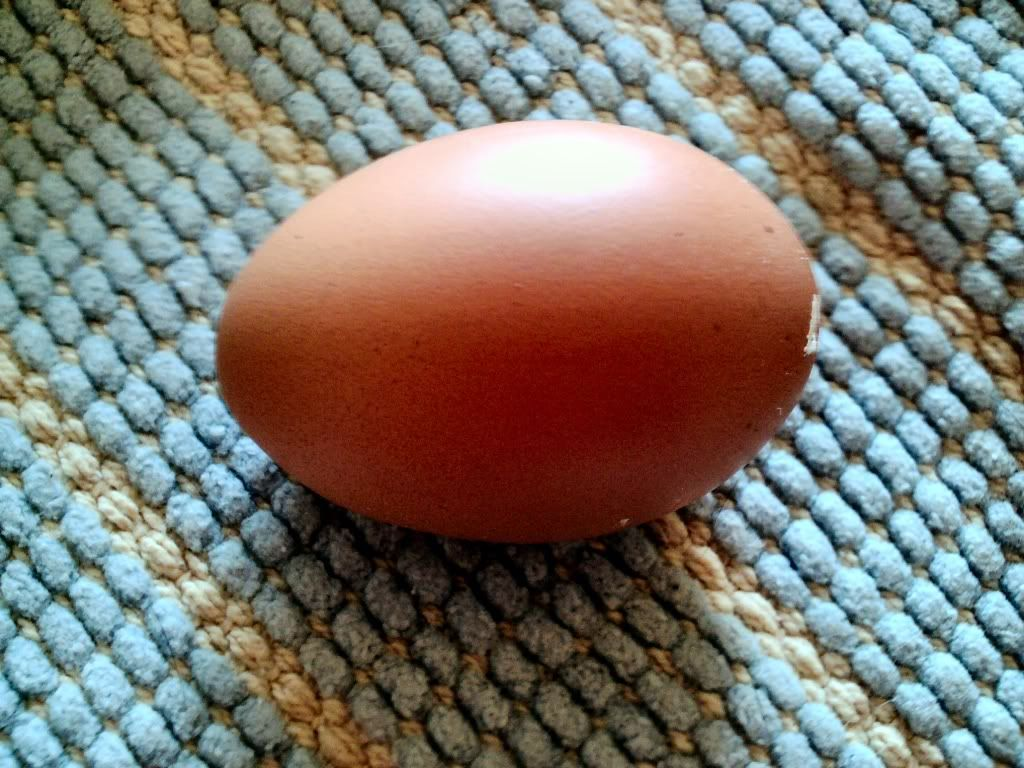 Eggnumber3thisonefromAnode001210408.jpg