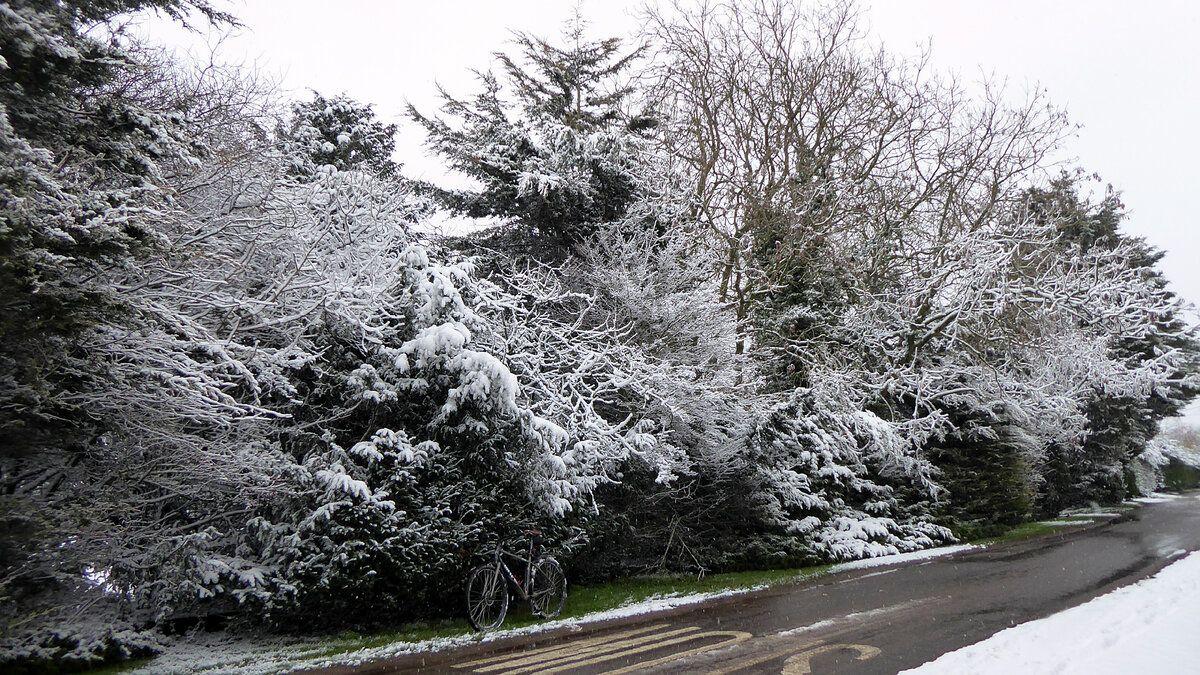 Gulphur Road snow covered trees.JPG