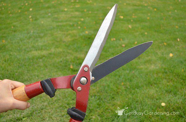 hedge-pruning-shears-cleaned-and-sharpened.jpg