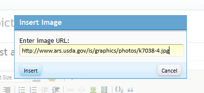 how-to-upload-url-03.PNG