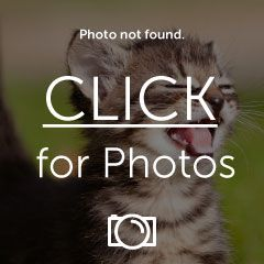 imagejpg1_zps49bf87aa.jpg