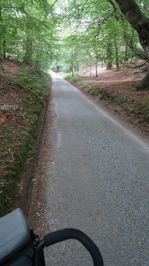 Large-leafy-lane.jpg