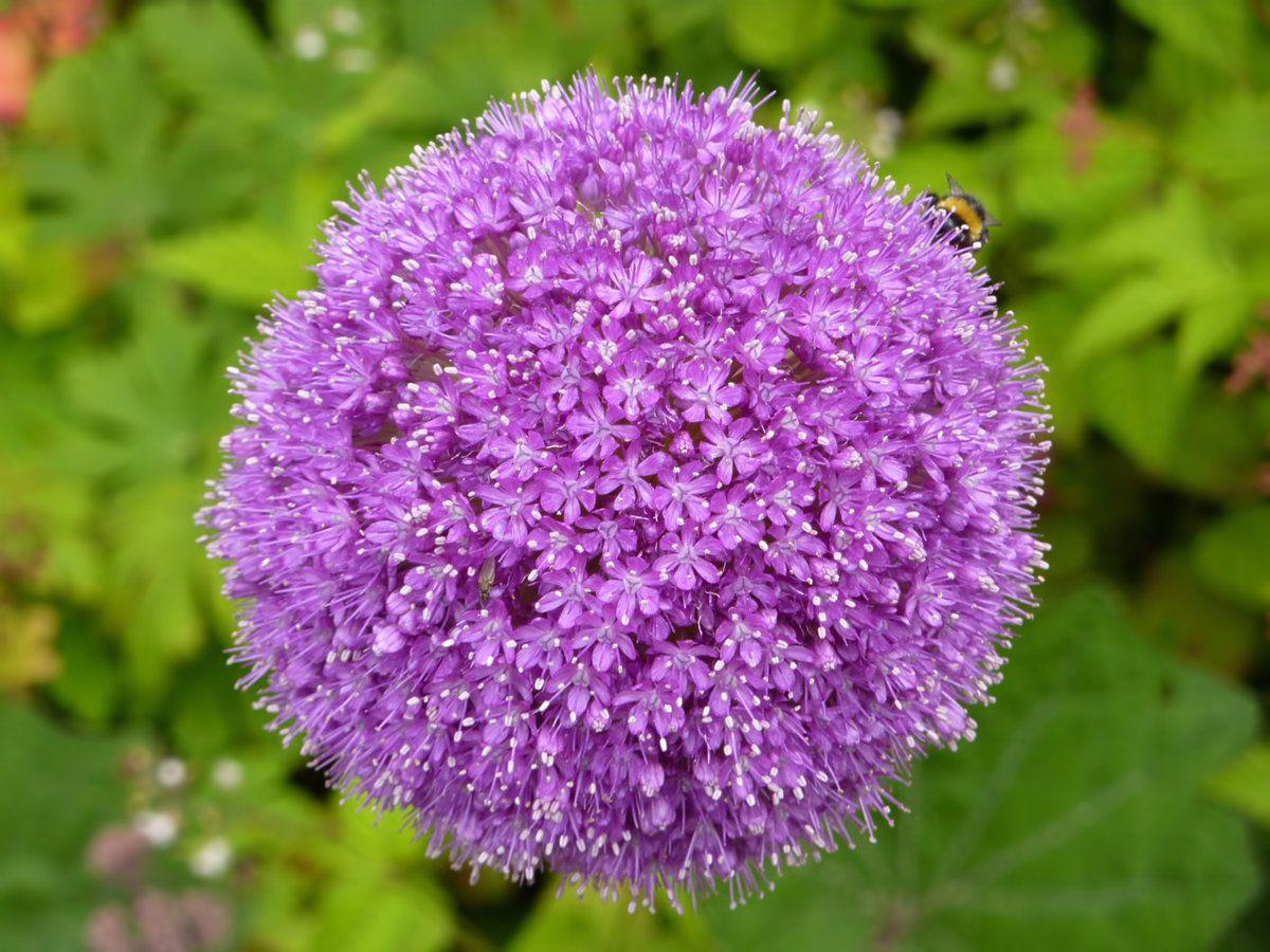 lilacflower.jpg