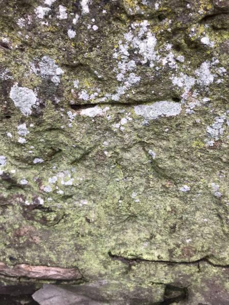 NS 4235 6296 Johnstone, Graham St, Wall.jpg