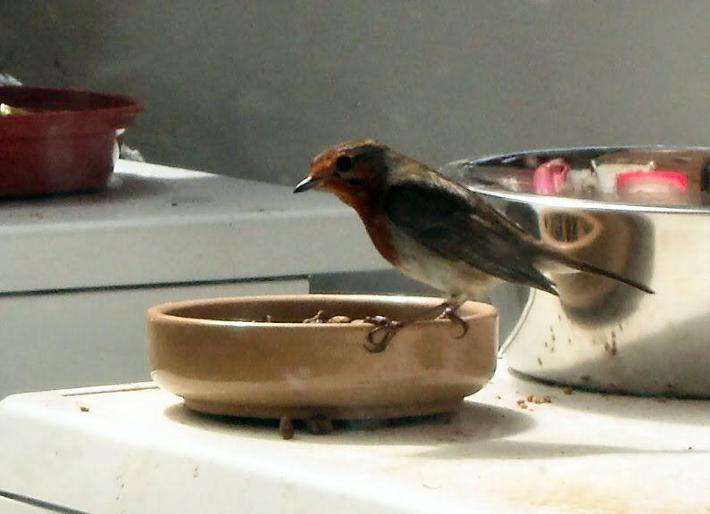 RobinhelpingitselftoWafflessfood-1.jpg