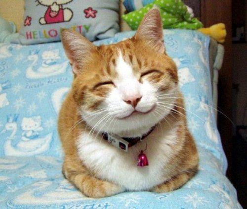 Smiling-Cat.jpg