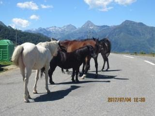 th-201706-italy-france-trip-animals-05-hautacam-horses-on-road.jpg