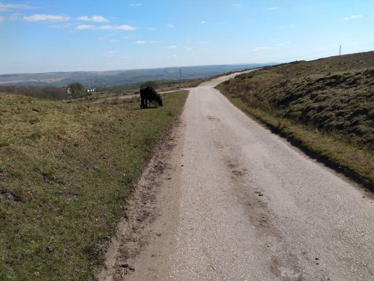Track over Syke Moor.jpg
