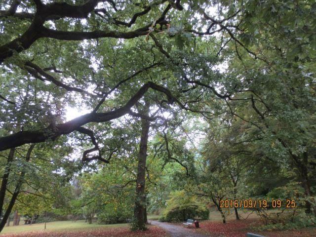 wrapup-geneva-jardin-botanique.jpg