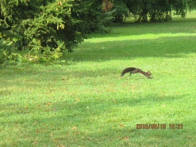 wrapup-geneva-jardin-botanique-squirrel.jpg